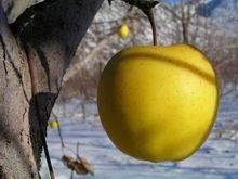 В.Филаретов «Выживание зимой: оздоровление и оптимизация потребления»