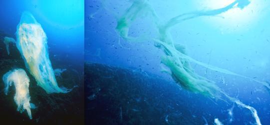 В 1991-м и октябре 2009-го скопления морской слизи у берегов Адриатики изучала морской биолог, Серена Фонда Юмами (фото).