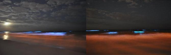 Нетипичное флуоресцентное сине-красное свечение морской воды на побережье Флориды