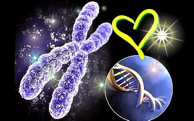 Цепочка хромосомная (Видео + mp3)