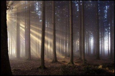 Лес- это жизнь!