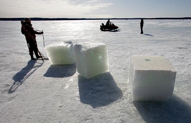 Заполярье, ледяное море (- 1,5°), две белухи и… девушка