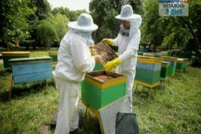 Наука 2.0. Опыты дилетанта. Пчеловодство (2011) SATRip