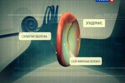 Наука 2.0. Человеческий фактор. Звуковые волны (2011) SATRip