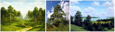 Священные Деревья Славян Русов