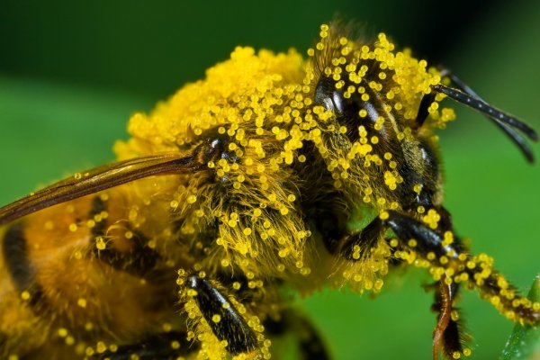 Здоровый сон с пчёлами