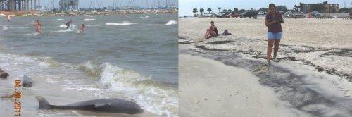 Метастазы Мексиканского залива. Часть 13-1