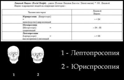 15 антропологических типов европеоидной расы