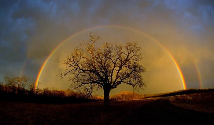 http://via-midgard.info//uploads/posts/2013-01/1358534407_rainbowandtree.jpg