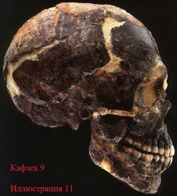 Неандерталец, найденный в льдах Альп. Человек действительно не произошёл от неандертальца.