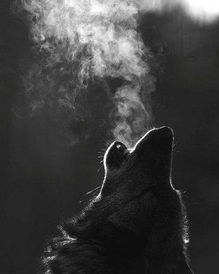Культ волка: волк в поверьях славян