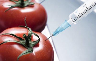 Комиссия РАН готовит меморандум, опровергающий вред ГМО