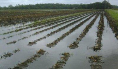 В республике Башкортостан объявлен режим ЧС из за дождей