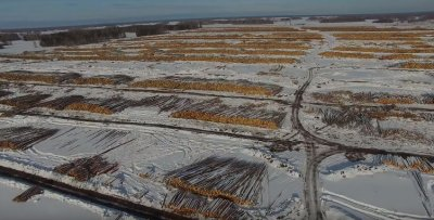 Китайцы уничтожают русские леса Сибири