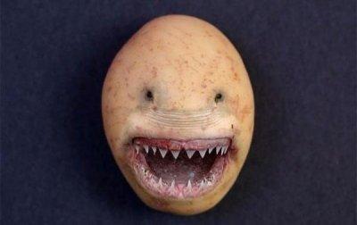 Осторожно! - «Картофель-убийца». Вредные свойства
