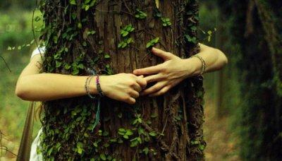 Волшебные свойства деревьев