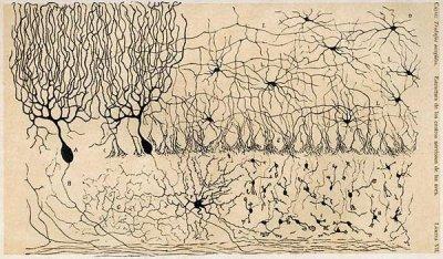 Нервные клетки восстанавливаются