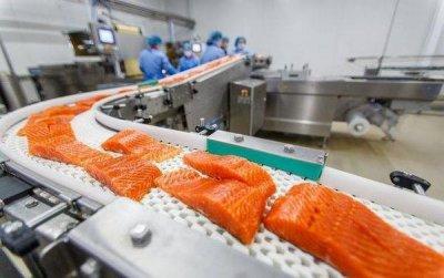 «Норвежский лосось — самая токсичная еда во всём мире»