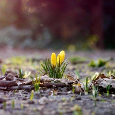 Боги весны: кого чествуют славяне весной?