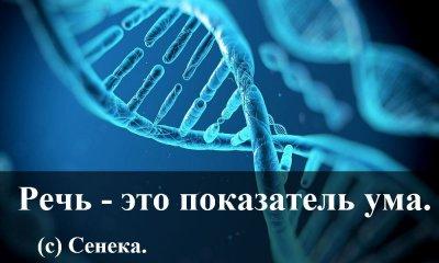 Влияние матов на ДНК