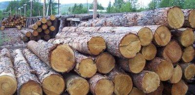 Каждый россиянин имеет право бесплатно получить 150 кубов леса на строительство дома