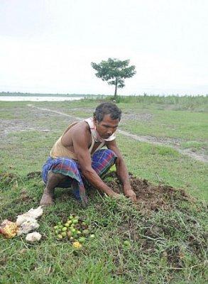 Житель Индии самостоятельно вырастил 550 гектар леса
