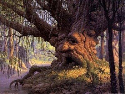 Лечение энергией деревьев - дендротерапия