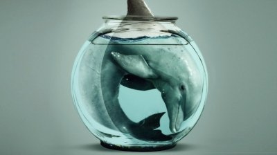 Факты о жизни дельфинов в неволи. Поход в дельфинарий - оплачиваемое убийство