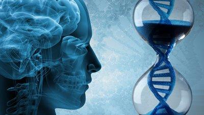 Интересные генетические факты про интеллект