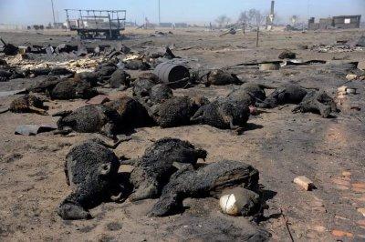 Забайкальский край становится выжженной степью