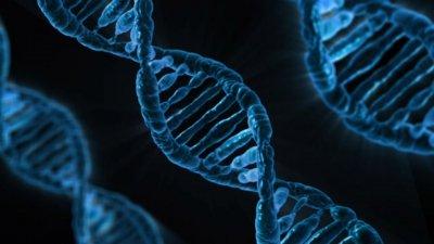 Эволюция ДНК. Изменения после квантового перехода