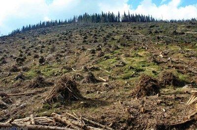 300,000 гектар леса отдали под спил в Тверской области