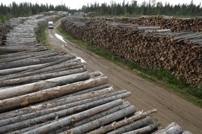 Леса Архангельской области превращают в тундру