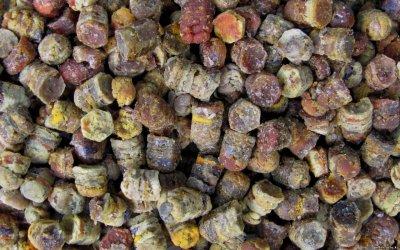 Полезные свойства перги или пчелиного хлеба
