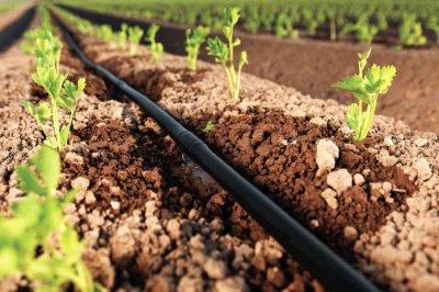 Почему стоит установить капельный полив растений?