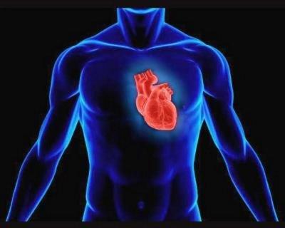 Как защитить главный орган человека — сердце