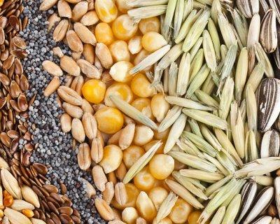 На чем основываться, выбирая семена