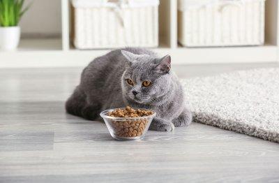 Общие принципы ухода за котами и кошками