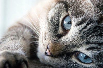 День кошки, как один из самых милых и домашних праздников