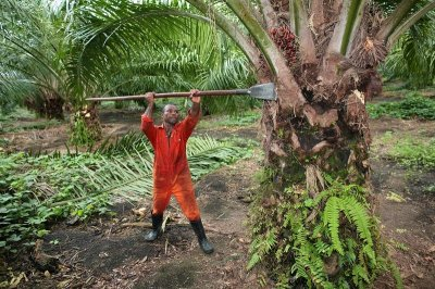 Пальмовое масло делают из нефти!