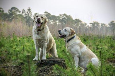 ТОП-7 самых умных собак