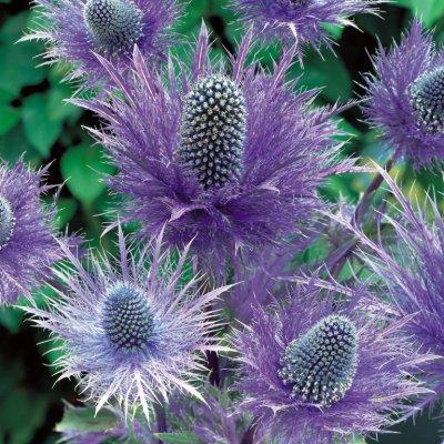 Самые удивительные цветы мира