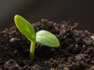 4 условия для прорастания семян