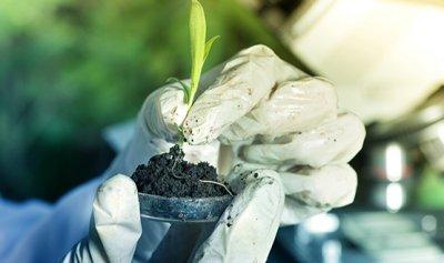 Как проводится химический анализ почвы?