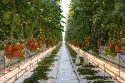 Овощеводство: 7 самых распространенных ошибок