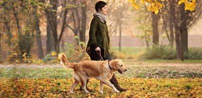 Профессиональный выгул собак в Украине