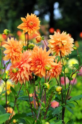 Сакральный мир цветов