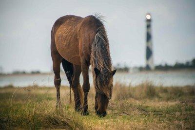 Правильный уход за ногами лошади - залог ее здоровья