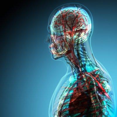 Последние открытия в области анатомии