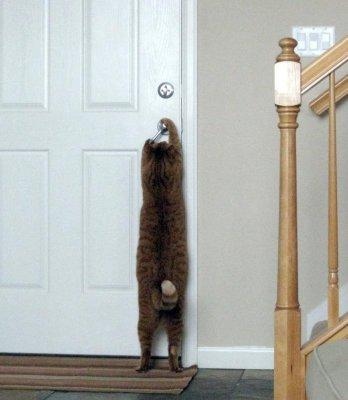Если кошка просит открыть дверь - что ей нужно?